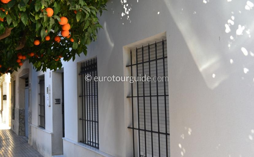 Oranges growing in the streets of Almoradi Spain What to see in  Almoradi