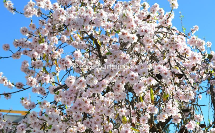 Almond Blossom Trail Jalon Valley, Eurotourguide provides a full day out itinary to enjoy this beautiful landscape