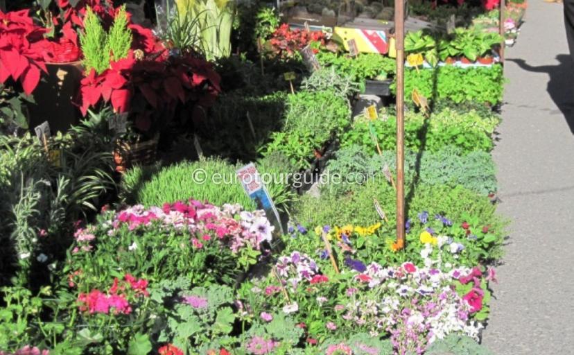 Garden Centres Costa Blanca Spain