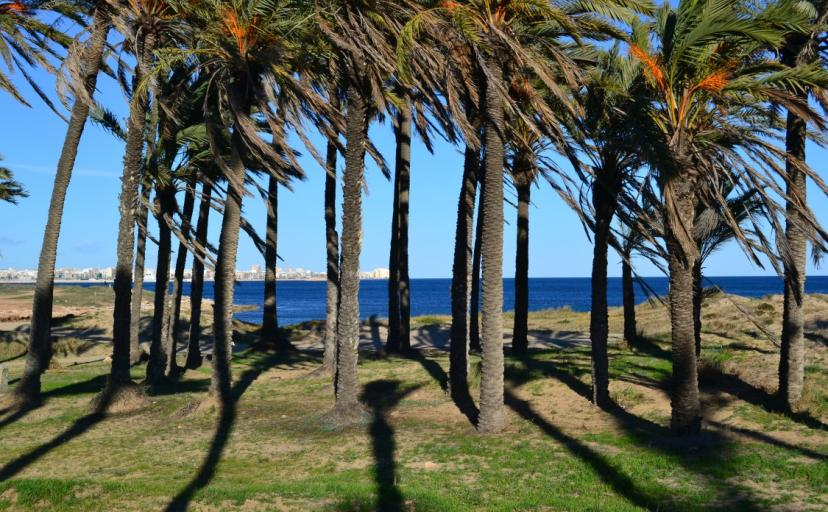 Images of Torrevieja, the rural beaches of the coast outside the main town