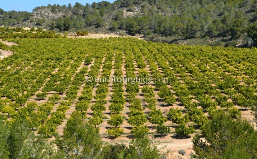 Pilar de la Horadada & Pinar de Campoverde Agriculture