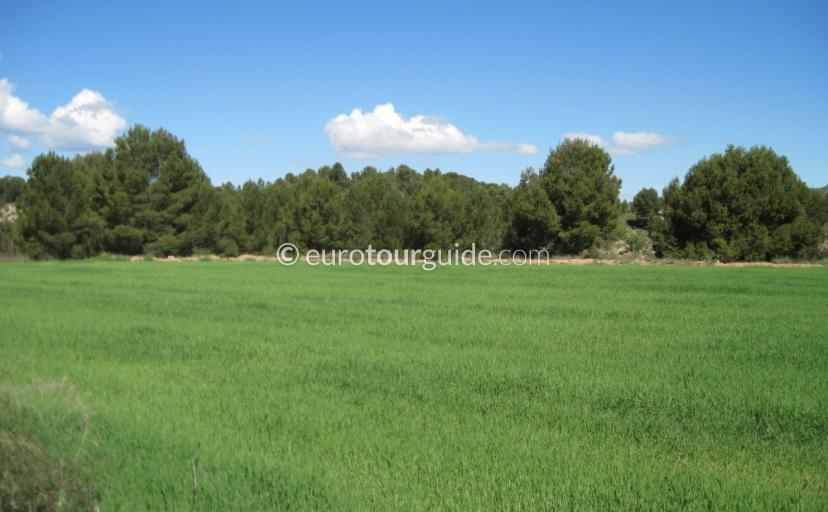 Where to go Nordest Valley Inland Murcia Spain, Seeing the rice fields is one of many places to visit and things to do