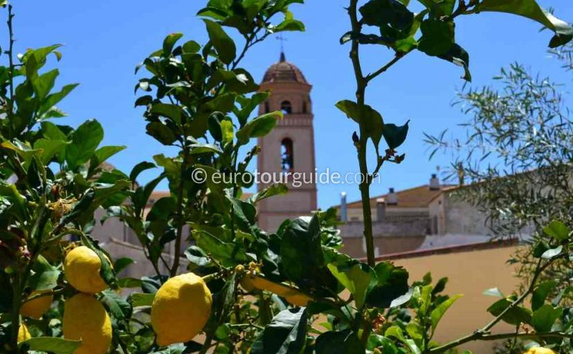 Places to visit in Sucina Murcia Spain, Picking the lemons is one of many things to do.