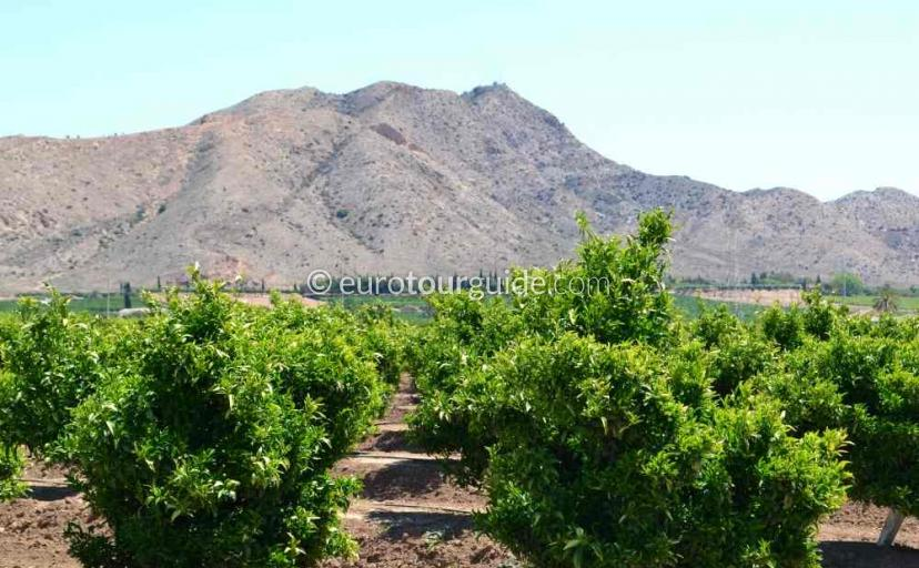 Holiday in Torre Pacheco  Murcia Spain, walking and cycling in the courntry side around Torre Pacheco  one of many things to do and places to visit here.