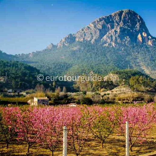 EuroTourGuide Coach Tour 11th March Peach Blossom Ricote Valley