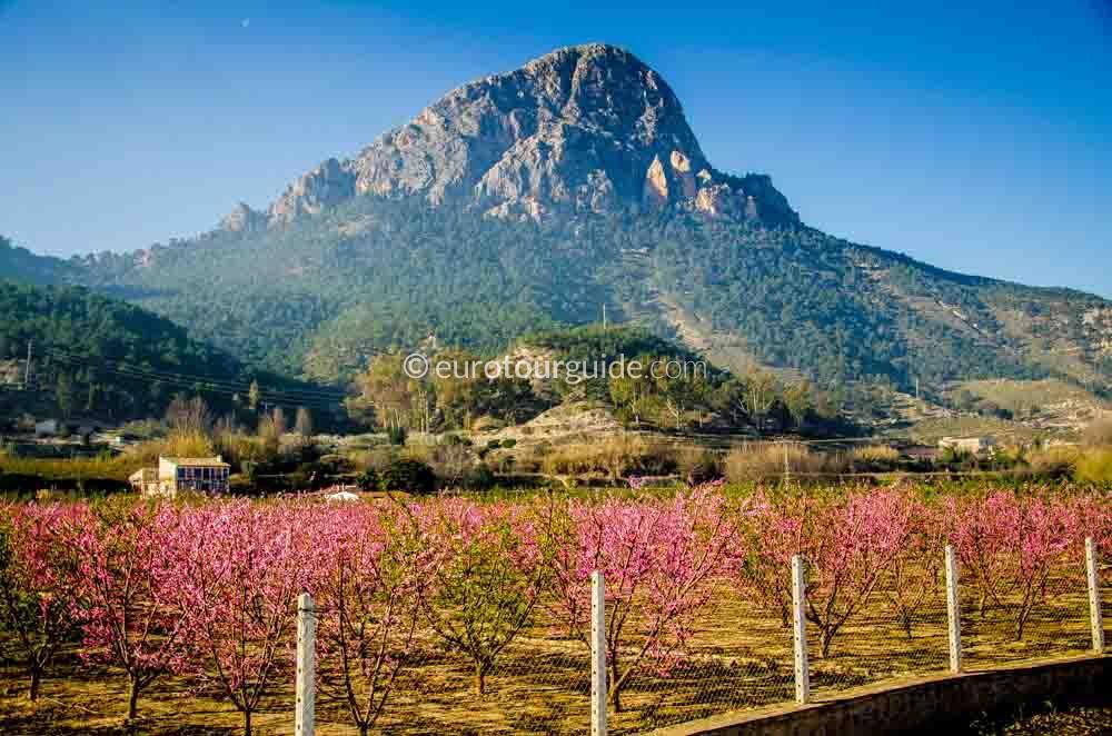 EuroTourGuide Coach Tour 11th March Peach Blossom Ricote Valley